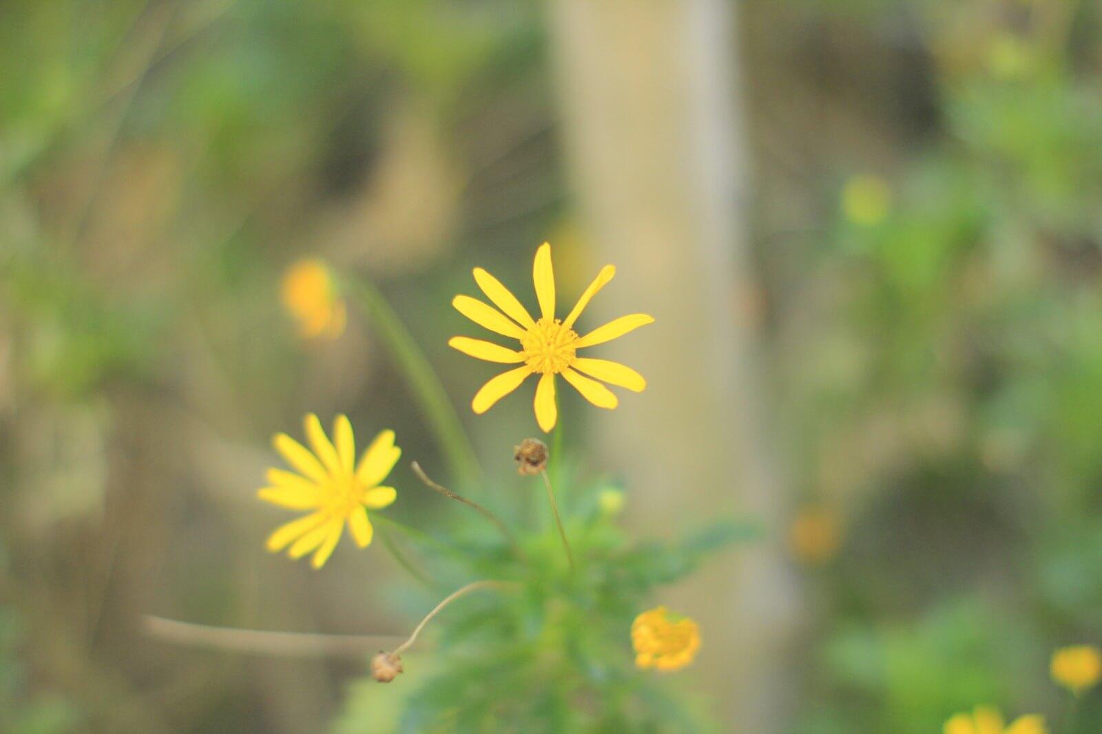 f1.4-yellow
