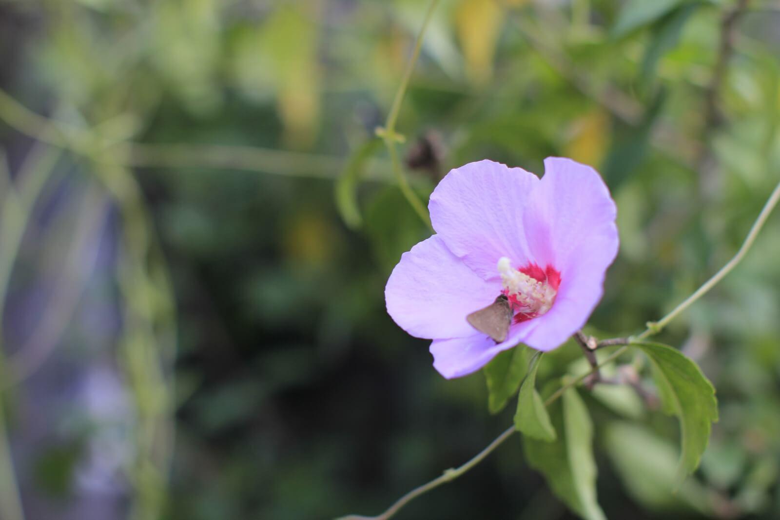 f2.8-pink-flower