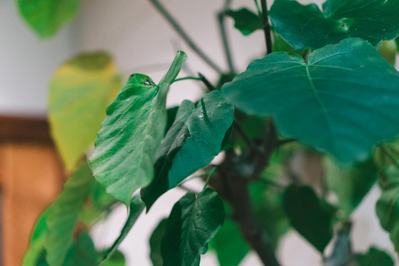 α6000で撮影した葉っぱの写真
