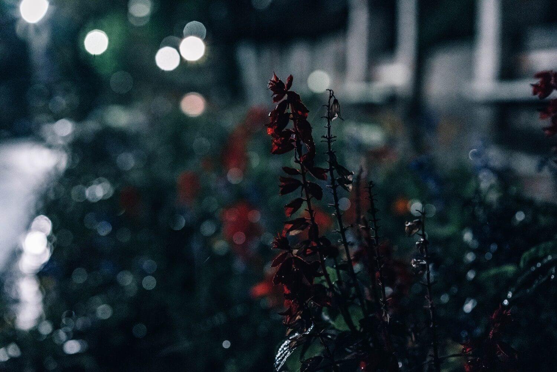 Rains photo 0003