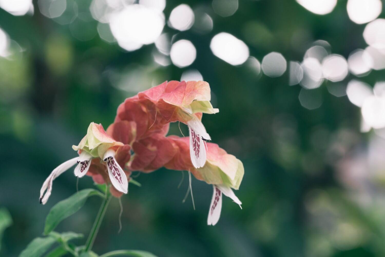 普段はなかなか見ない色味の植物がたくさん