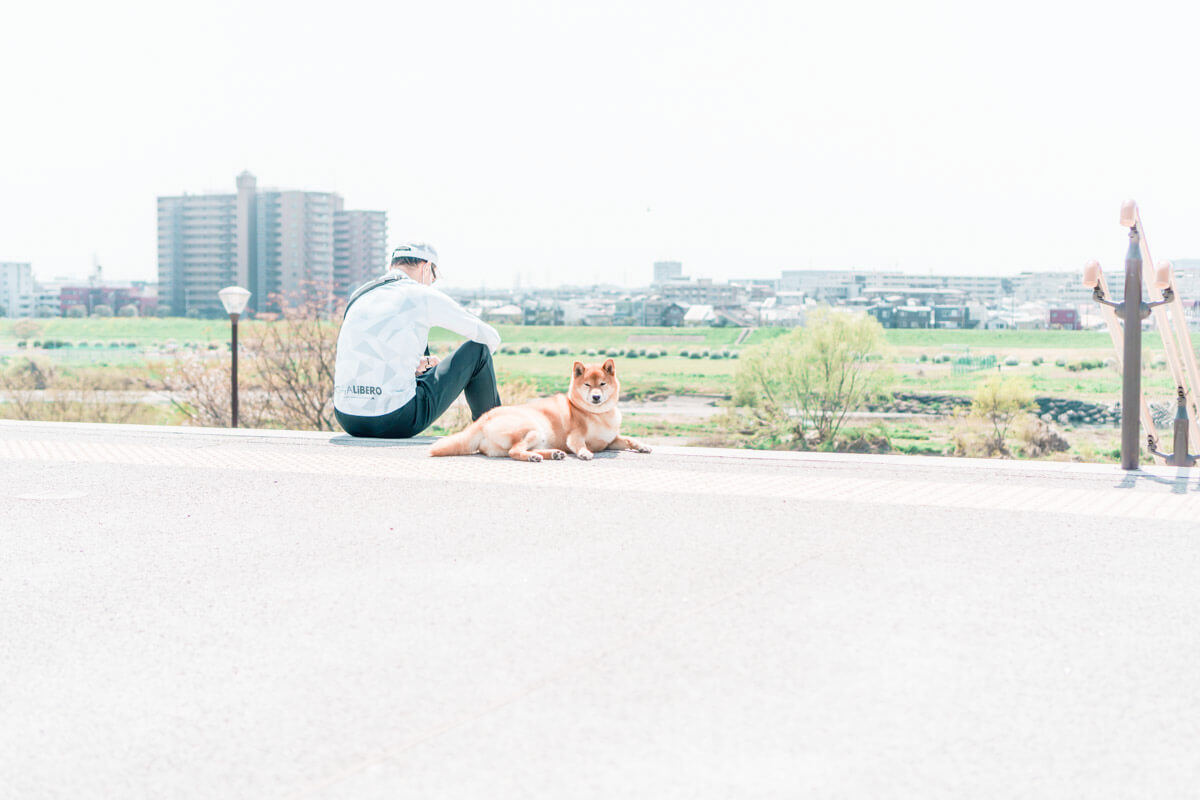 二子玉川にいた犬