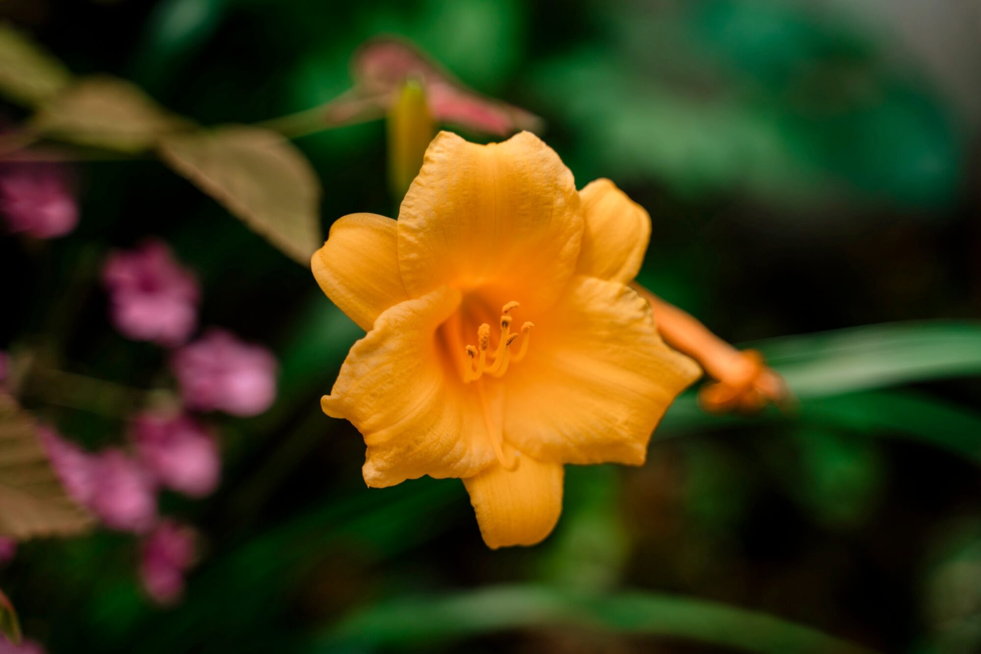 テレ端で撮影した花の写真