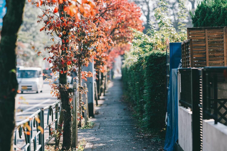 だんだんと赤くなる、小金井公園近くの木々
